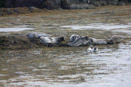 Harbour View Bed and Breakfast: Robben im Hafen von Tobermory