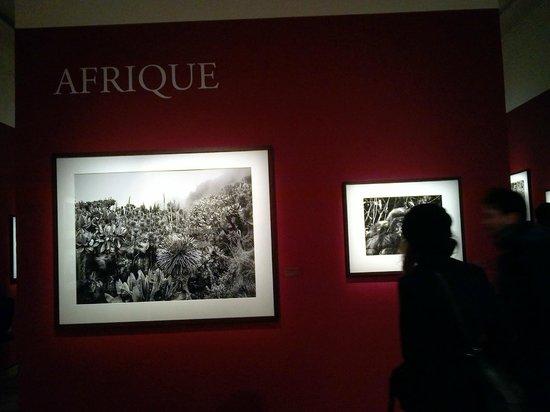 La Maison Europeenne de la Photographie: Genesis de Sebastião Salgado