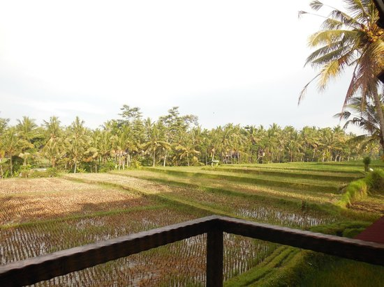 Junjungan Ubud Hotel and Spa: The view from our balcony