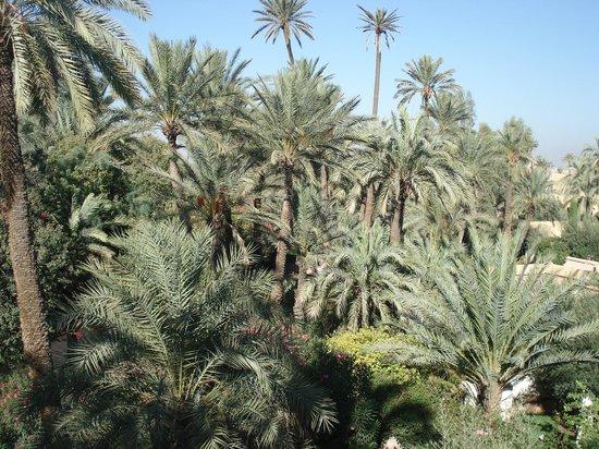 Club Med Marrakech le Riad: une des vues de la terrasse de la suite