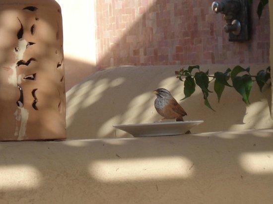 Club Med Marrakech le Riad : un compagnon du petit déjeuner