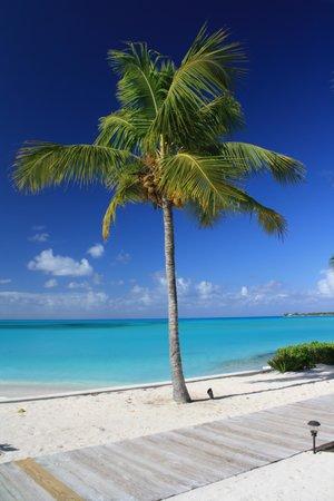 Cape Santa Maria Beach Resort & Villas : Palma al CSM