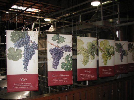 Chateau Ste. Michelle Vineyards : Interesting tours