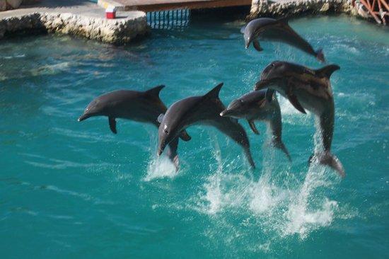 Dolphinaris Cozumel... een fantastische ervaring