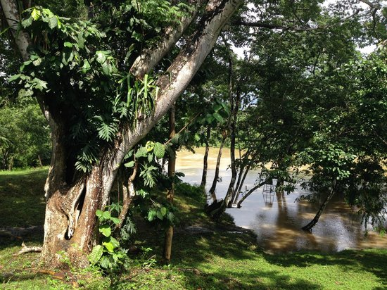Howler Monkey Resort: the view from my cabin