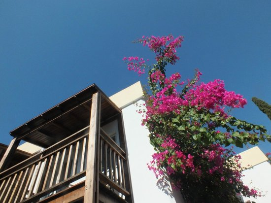 smartline Bitez Garden Life Hotel & Suites: Blüte lila
