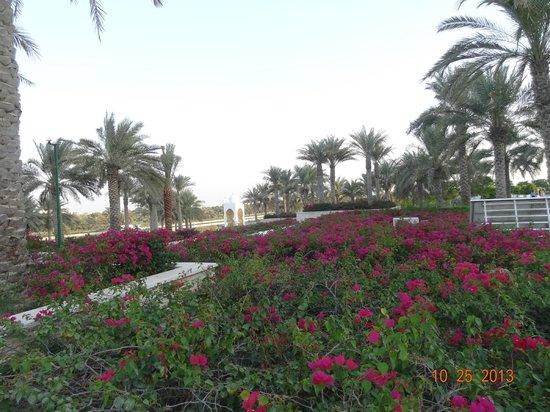 Sheikh Zayed Mosque: Jardim
