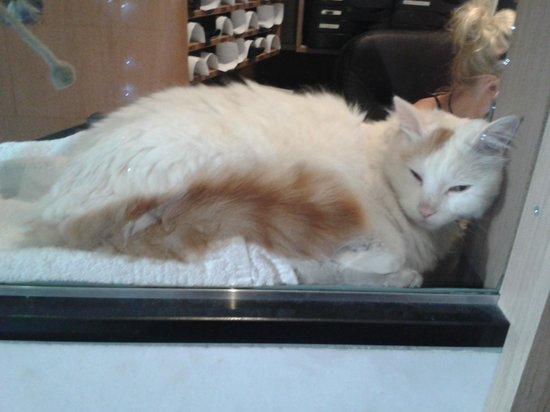 Delta Hotel Amsterdam City Centre: cat in reception window