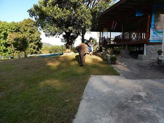 Merlin Beach Resort: elephant on route from hotel to Patong town