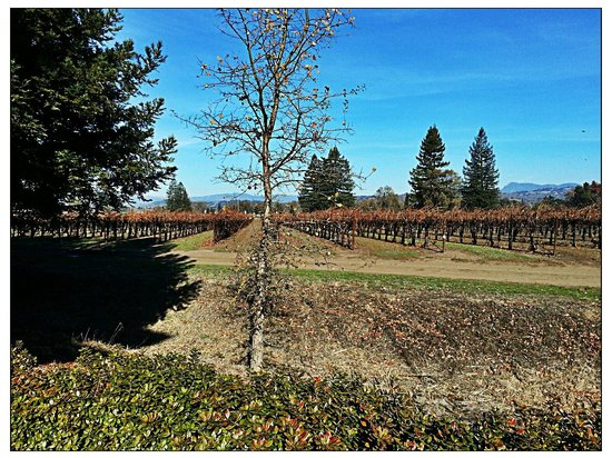 Hilton Garden Inn Sonoma County Airport: Winter View of Adjoining Vineyard