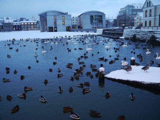 CenterHotel Plaza: Reykjavik lake