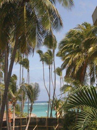 Grand Palladium Punta Cana Resort & Spa: Palmeras