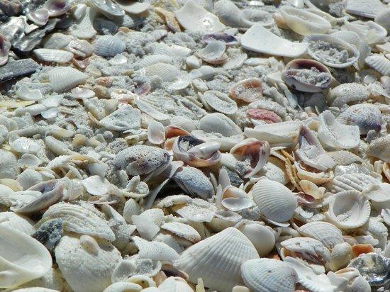 Ocean's Reach Condominiums: The beach shells