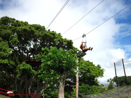 Bay View Mini-Putt And Zipline: Zip from our Banyan Tree