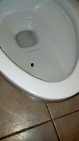 DoubleTree by Hilton The Tudor Arms Hotel: Stink bug in the toilet. Hmm...?