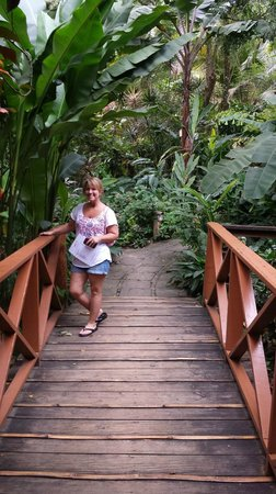 Fond Doux Plantation & Resort : bridge in the jungle at Fond Doux