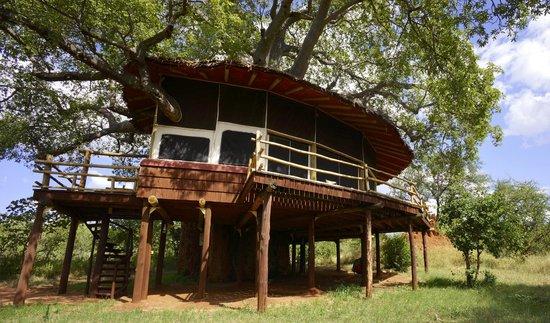 Tarangire Treetops: Lodge 6