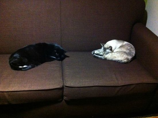 Days Inn & Suites Winnie: Even the Cats were comfortable