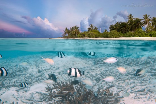 PER AQUUM Niyama Maldives : View from the sea