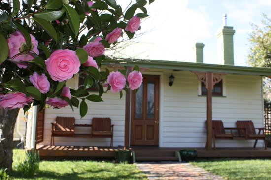 Westbury Gingerbread Cottages: Gorgeous Apple Tree Cottage - surrounded by camelia and apple trees