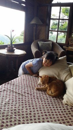 Sarinbuana Eco Lodge: The cat in the treehouse
