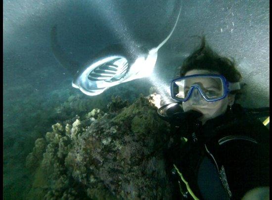Kona Diving Company >> Amazing Picture Of Kona Diving Company Kailua Kona