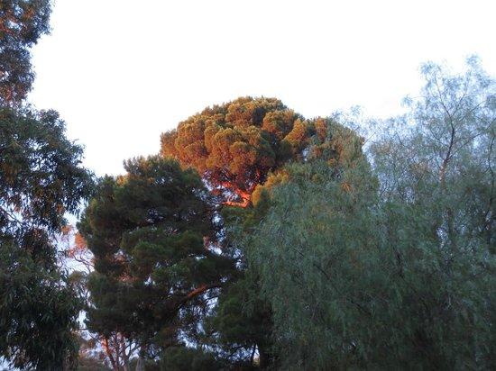 The Paddocks: Sunset