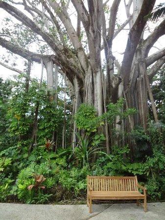 Haleiwa Joe's : tree