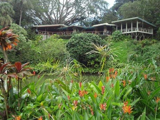 Haleiwa Joe's : garden