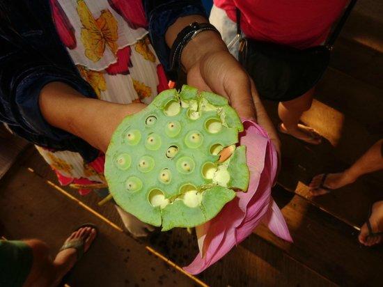 Lotus Farm by Samatoa: Lotus Farm, Siem Reap, Cambodia