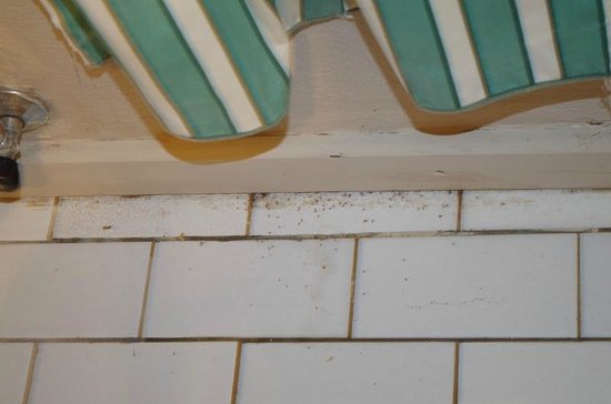 Shangri-La Country Hotel & Spa: Dirt and insects behind the towel rack and toilet