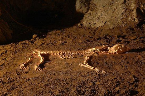 Onati, Spain: Unico ejemplar del león de las cavernas de la península