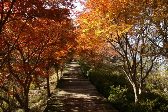 Izunokuni Panorama Park: 紅葉に囲まれた歩道