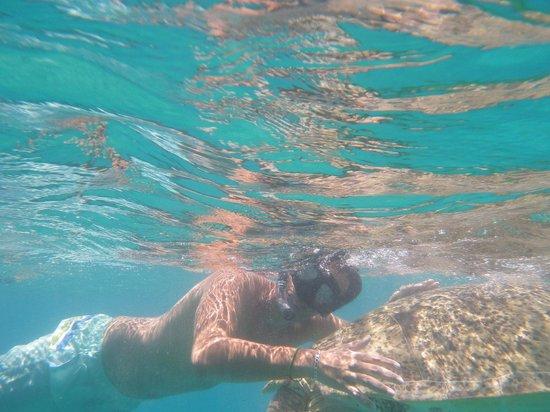 Coral View Island Resort: tortue marine
