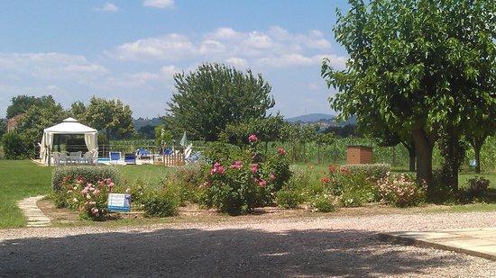 Agriturismo I Mori Gelsi : Vista sulla piscina