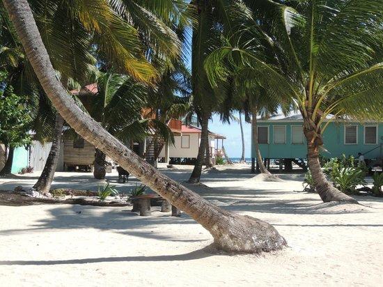Tobacco Caye Paradise: Interior de la isla