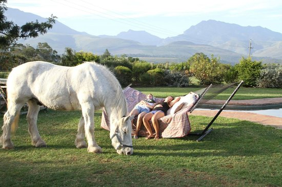 Outeniqua Moon Percheron Stud and Guest Farm : Guests lounging in the hammock with Bob grazing