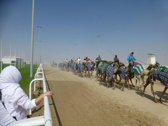 Ash-Shahaniyah, Qatar: Al Shahainya Camel Racetrack