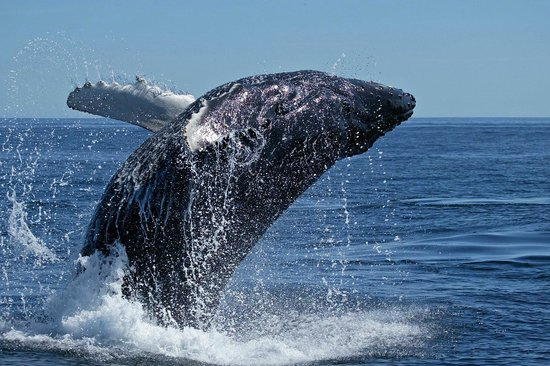 Sea Star Lodge: Whale Watching