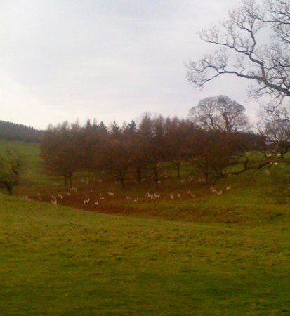 nearby deer at chatsworth