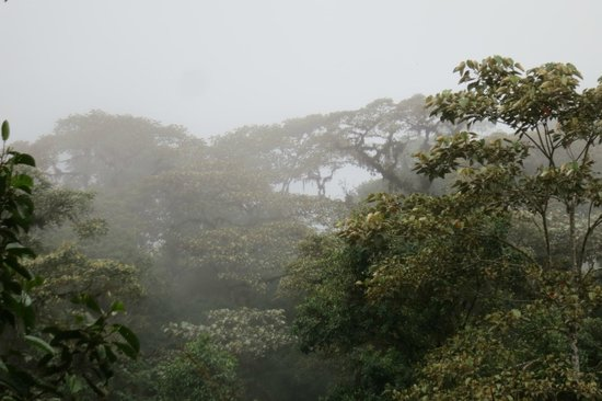 Reserva las Gralarias: cloud forest