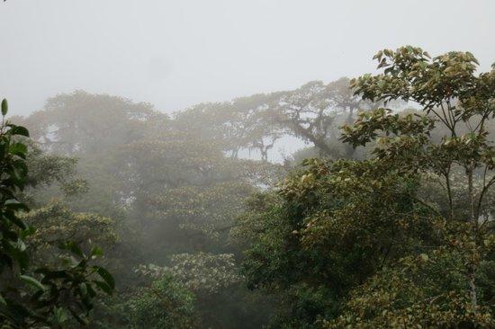 Reserva las Gralarias : cloud forest