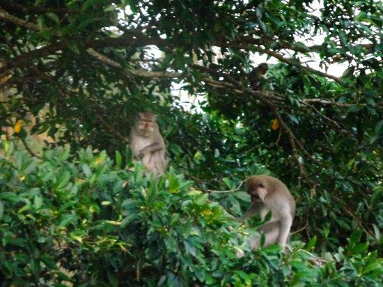 Alila Ubud: Monkeys watching us at dinner :)
