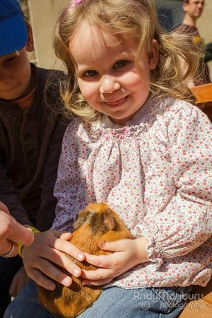 Old Down Country Park : Animal Encounters