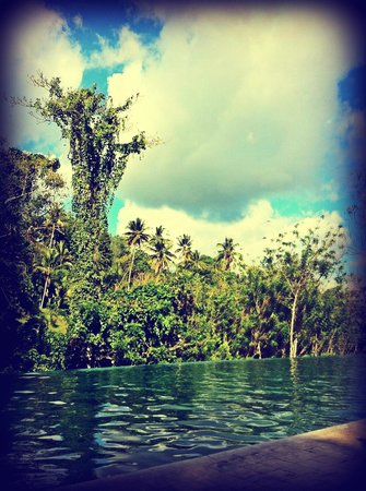 Alila Ubud: view from the pool chair