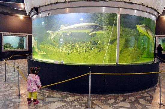 Oceanarium Akvamir: tanque central