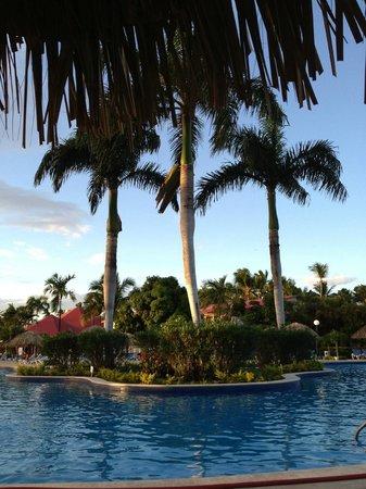 Grand Bahia Principe La Romana: Palm Trees