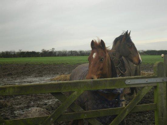 Lower Drayton Farm: Horses