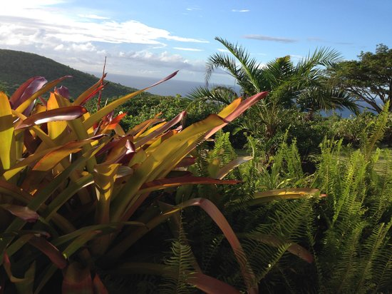 Montpelier Plantation & Beach: View from our back patio (#5)