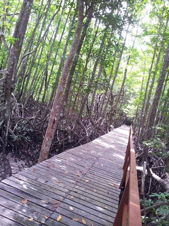 Manja Hotel: Jungle Trecking - Gaya Island